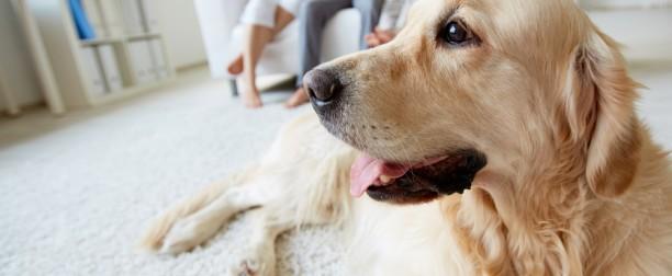 Condos and Pets